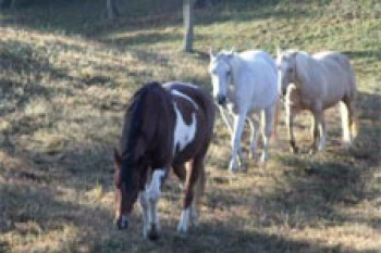 R-Ranch Private Herd